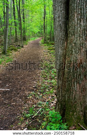 Inviting Dirt Path with Wood Chips for Peaceful Walk - stock photo