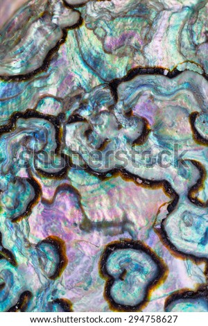Iridescent nacre mother-of-pearl inner side of Paua, Perlemoen or Abalone shell macro background texture pattern