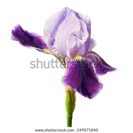 Iris flower isolated over white background with clipping path included - stock photo