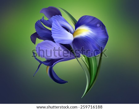 iris flower painted