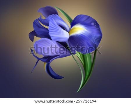 iris flower painted - stock photo