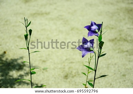 https://thumb1.shutterstock.com/display_pic_with_logo/167494286/695592796/stock-photo-iris-in-garden-695592796.jpg