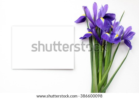 Iris Mockup. Post blog social media 8 march. Top view with blank space. Stylish trendy photography. - stock photo