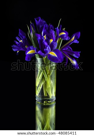 Irises in a glass vase on a black background