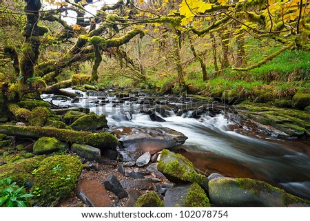 Irish creek of Clare Glens in Co. Limerick - stock photo