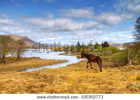 Irish horse in Connemara mountains
