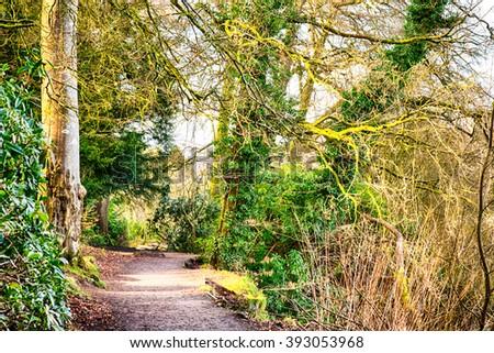 Irish Woodland Scene, Hillsborough Forest Park, County Down, Northern Ireland. - stock photo