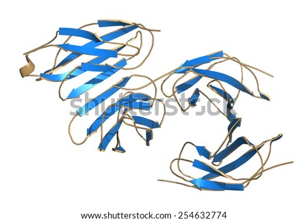 Irisin (Fibronectin type III domain-containing protein 5) protein. Myokine shown to promote conversion of white to brown fat tissue. Cartoon model, secondary structure coloring.  - stock photo