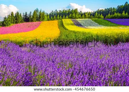 Irodori field, Tomita farm, Furano, Japan. It is the famous and beautiful flower fields in Hokkaido - stock photo