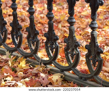 Iron fence and fall leaves - stock photo