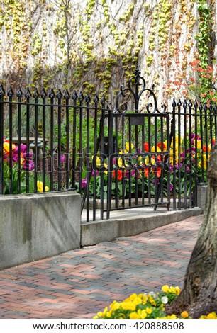 Iron gate and fence, brick sidewalk, colorful tulips and boston ivy vine - stock photo