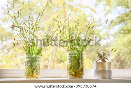 Ironweed,Dandelion,Fireweed,Cactus  in the jar