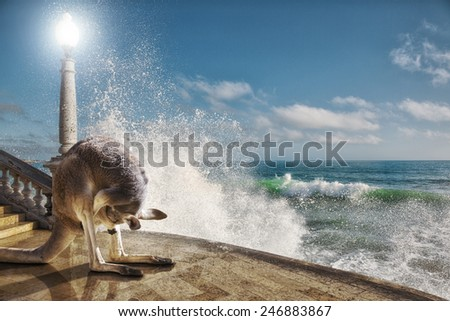 irreal image: Kangaroo with his nose in the bag next to a wave breaks on the floor. abstract photomanipulation