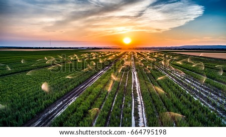 Irrigation at a field in the sunset, aerial view