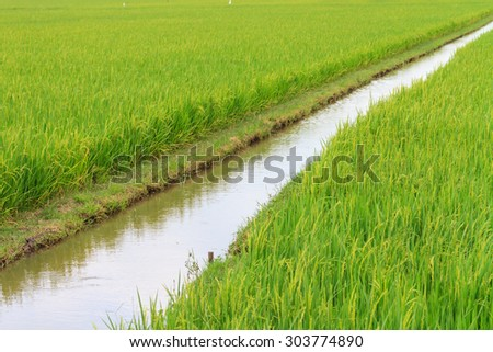 Irrigation canal in the paddy ,rural of Thailand - stock photo