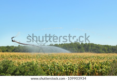 Irrigation equipment watering a field of corn