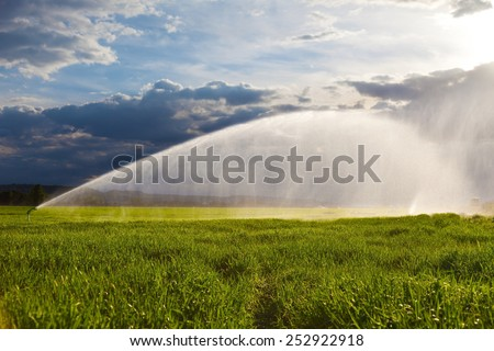 irrigation of a green wheat field against a dramatic sky at sunset - stock photo