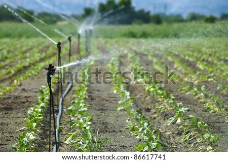 Irrigation on Agricultural land - stock photo
