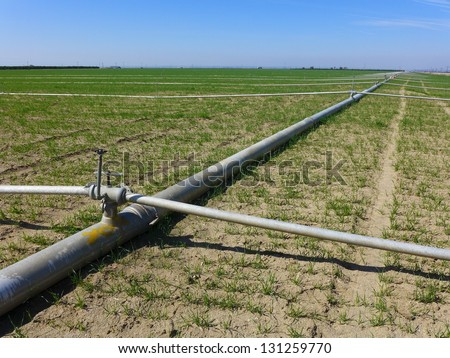 Irrigation pipes and sprinklers are laid out in a Central California farm field in early spring & Irrigation Pipes Sprinklers Laid Out Central Stock Photo (Royalty ...