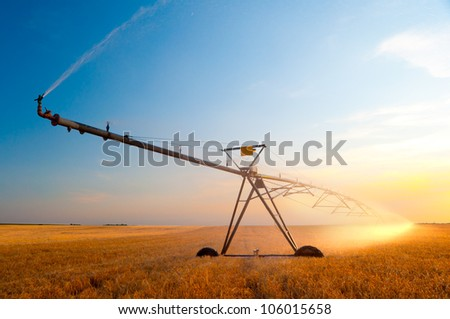 Irrigation pivot on the wheat field on sunny summer day. - stock photo