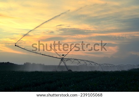 Irrigation system on the field of green beans at sunset on beautiful summer day. - stock photo
