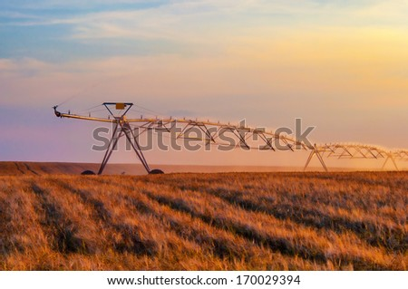 Irrigation system on the wheat field at sunset. - stock photo