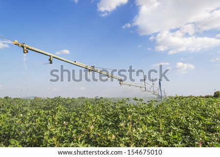 irrigation system over a ripe cotton field