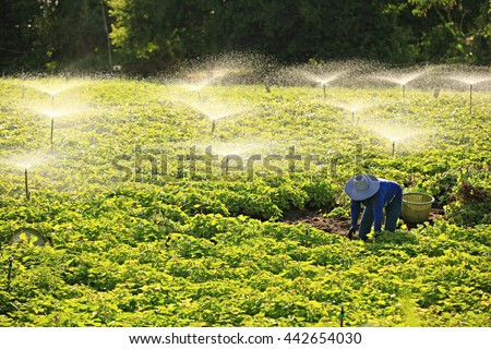 Irrigation systems Agriculture in the country, Thailand  - stock photo