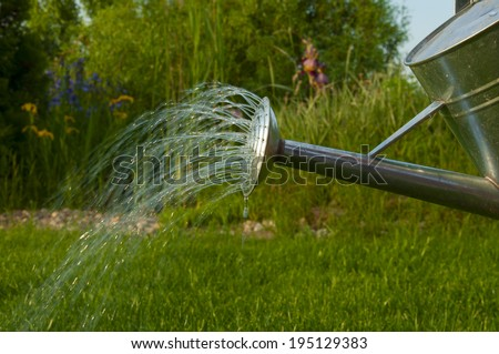 irrigation water from a metal watering can garden in summer