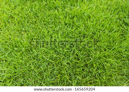 Is softer green grass and beautiful.