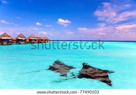Island in ocean, overwater villas and a eagle ray (Myliobatis aquila) in ocean - stock photo