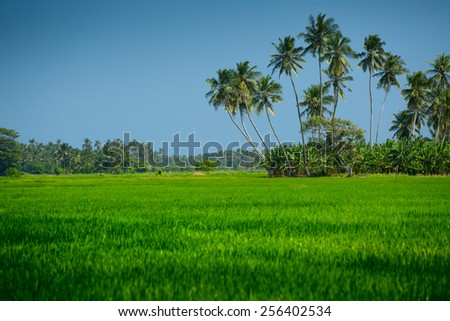 Island with palm trees in the middle of rice field - stock photo