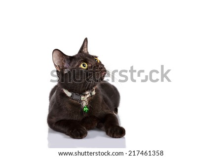 Isolate Black cat ,Yellow eye looking up and crouch on white background