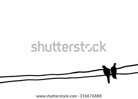 isolate couple bird on wire