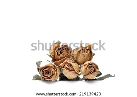 Isolate Dried Roses - stock photo