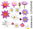 Isolate many lotus flowers with small colorful flowers, a variety of perspectives. - stock photo