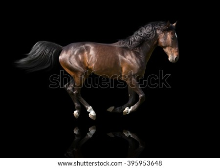 isolate of the brown horse galloping on the black background
