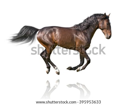 isolate of the brown horse galloping on the white background