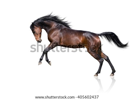 isolate of the brown horse jumping on a white background