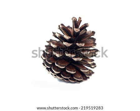 isolate pine cone on white background