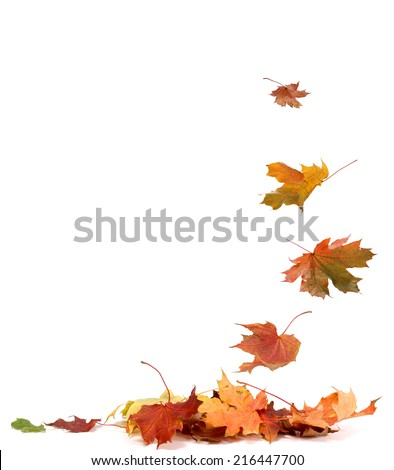 Isolated autumn leaves - stock photo