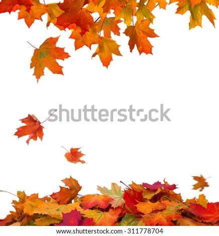 Isolated Autumn Leaves  - stock photo