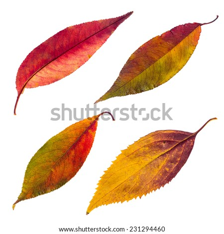 Isolated autumn leaves set - stock photo