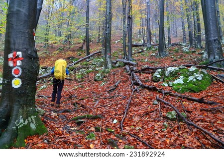 Isolated backpacker walking on a trail across fallen leaves in wet autumn forest  - stock photo