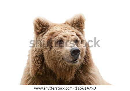 isolated bear head - stock photo