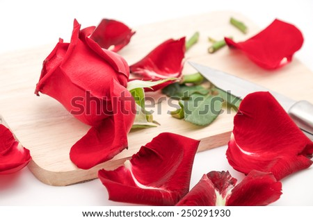 Isolated beautiful and fresh rose being cut on wooden board, symbol of broken heart on white background