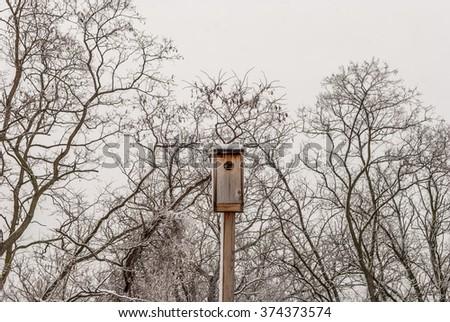 Isolated bird house. Outdoor bird feeder. Outside bird feeder nest. Winter tree background. Tree branches background. Winter forest landscape. Winter nature. White cloudy sky.   - stock photo