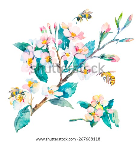Isolated blossoming branch. Spring flowers and bees. Spring.  - stock photo