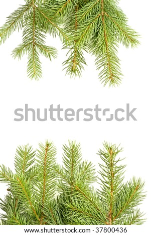 Isolated branches of pine on white background