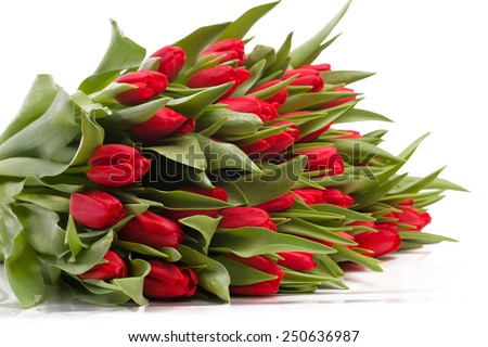 Isolated bunch of red tulips on a white background